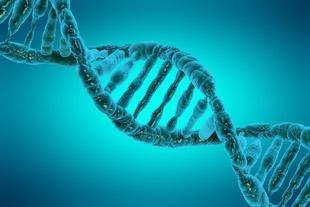 teoria-genetica